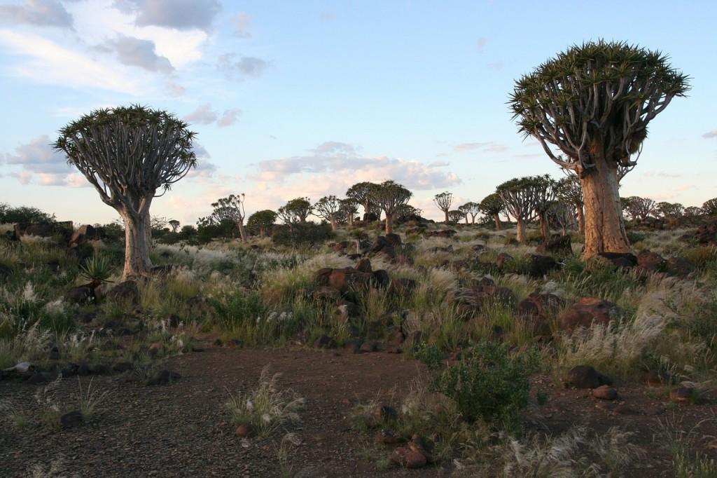 Namibia: Vielfältiges Reiseland